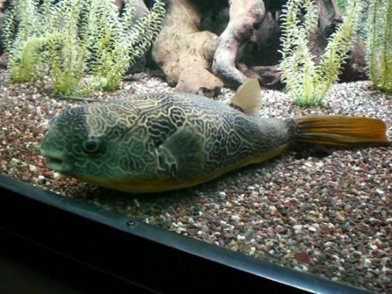 Shedd Aquarium - Jul 5
