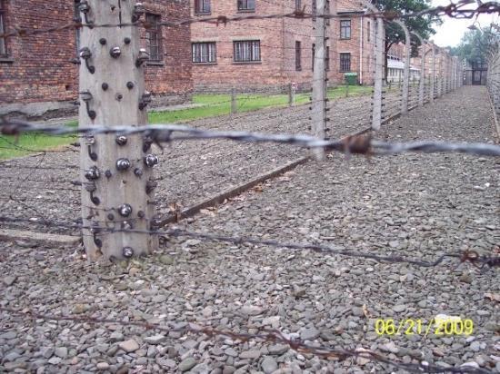 พิพิธภัณฑเอาชวิทซ์-เบียร์เคเนา: Barbed wire fence found at Auschwitz