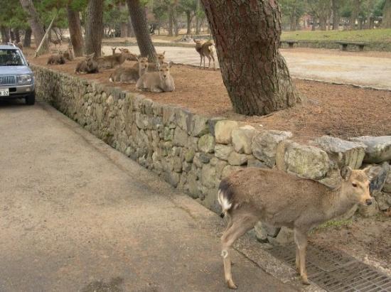 วัดโทไดจิ: Parco di Nara