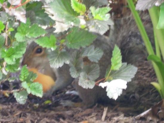 Niagara Falls State Park: Chipmunk is hiding eating a bread.... xD