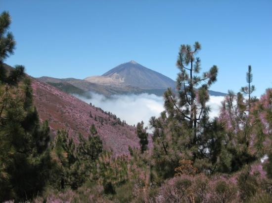 Teide National Park, สเปน: Parque Nacional del Teide