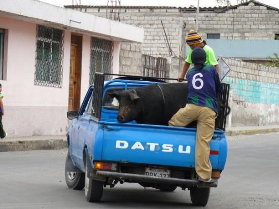 Quito, Ecuador: transportation in Cotachachi