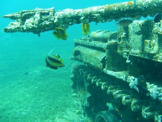 Aqaba International Dive Center: Sunken Russian tank Aqaba.