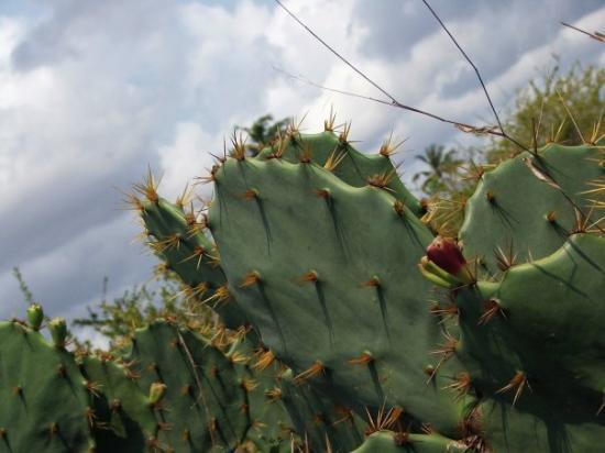 ดาร์ เอส ซาลาม, แทนซาเนีย: Just some cacti. Or cactusses.