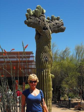 ฟินิกซ์, อาริโซน่า: my favorite cactus
