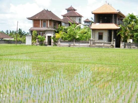 อูบุด, อินโดนีเซีย: Staying at 3 Dewis in Ubud