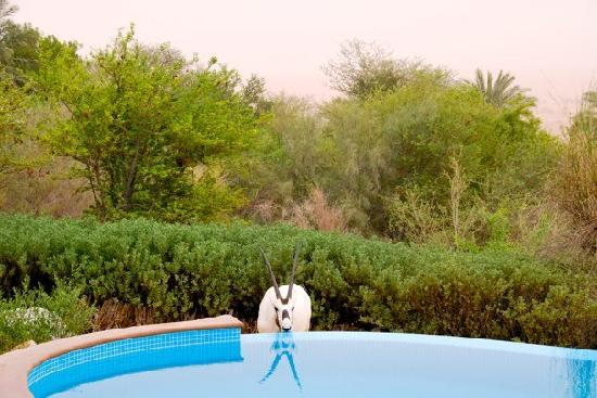 Al Maha, A Luxury Collection Desert Resort & Spa: Thirsty work, living in the desert!