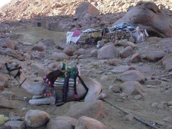 Saint Catherine, อียิปต์: asentamiento beduino.