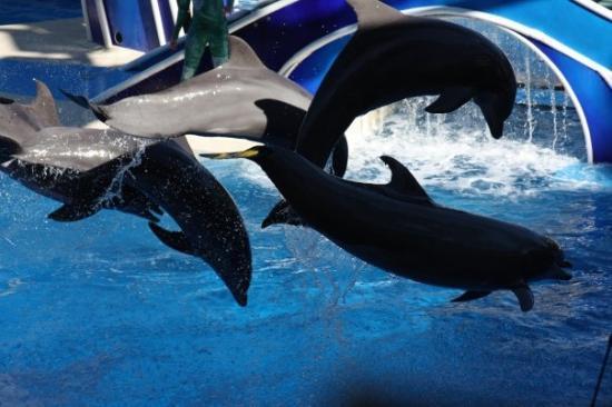 ซีเวิลด์ ออร์แลนโด: Dolphins show