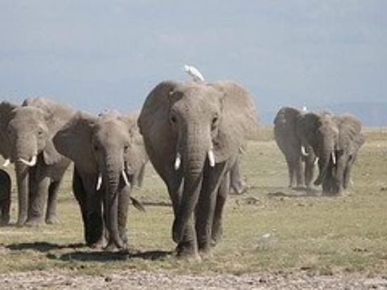 ไนโรบี, เคนยา: Yep, they were coming at us