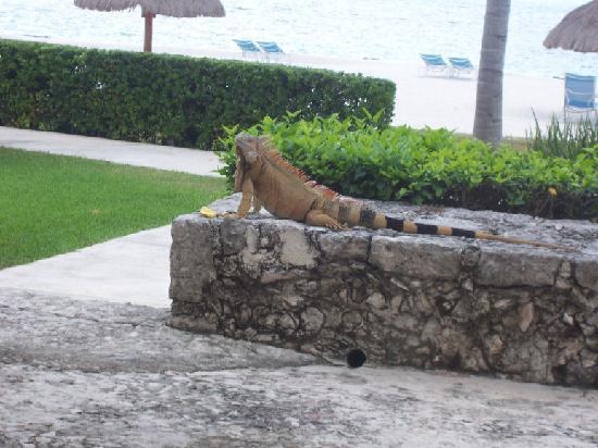 Presidente Inter-Continental Cozumel Resort & Spa: a new friend
