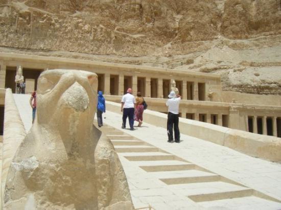 วิหารหัทเชฟัท ณ เดอีร์เอลบาฮารี: Horus at the beginning of the temple!