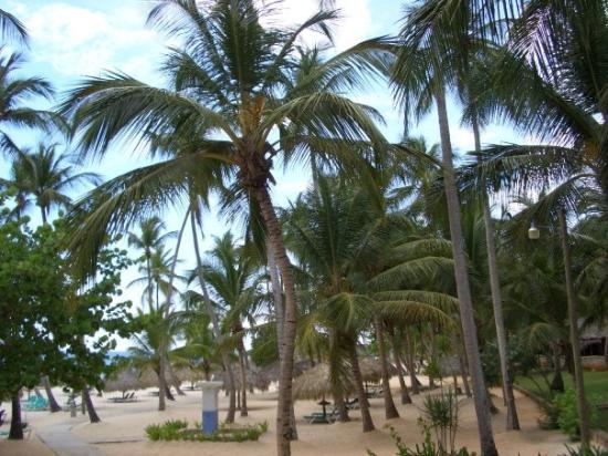 Viva Wyndham Dominicus Beach ภาพถ่าย