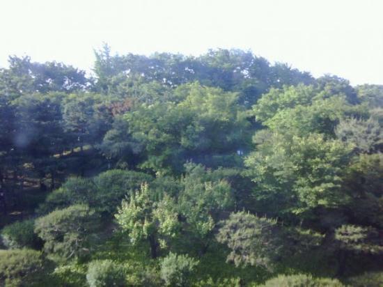 เดอะ ชิลลา โซล: The view from my room
