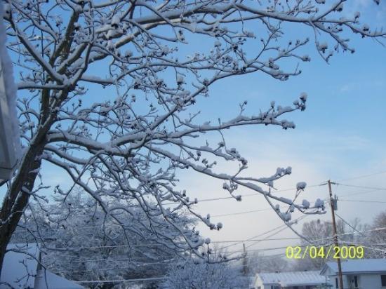 เซลมา, นอร์ทแคโรไลนา: Beautiful picture of the snow on my pecan tree