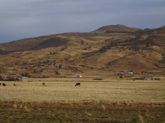 ปูโน, เปรู: Altiplano
