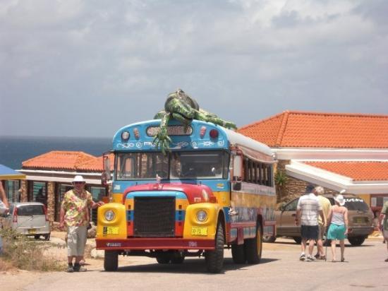 ปาล์มบีช/อีเกิลบีช, อารูบา: The bus that picked me up while walking thru the desert, YAY