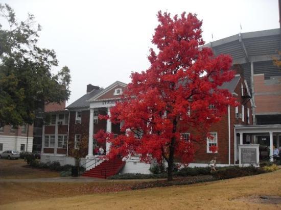 เบอร์มิงแฮม, อลาบาม่า: Birmingham, AL, États-Unis campus