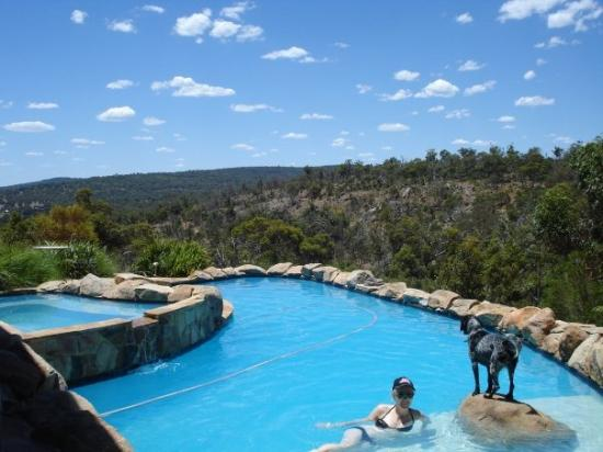 Greater Perth, Avustralya: my pool and hairy boy, Mikey Mike