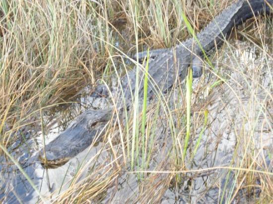 Port Everglades: Croco x)