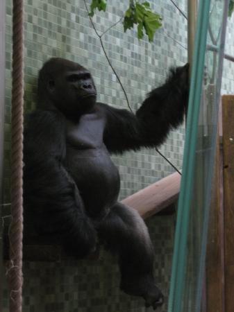 Berlin Zoological Garden ภาพถ่าย