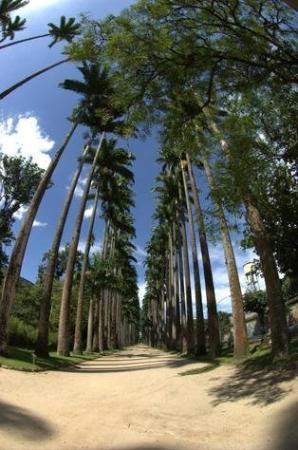 Botanical Garden (Jardim Botanico): Jadim Botanico. The main road in the borough is the Rua Jardim Botanico (Jardim Botanico Street