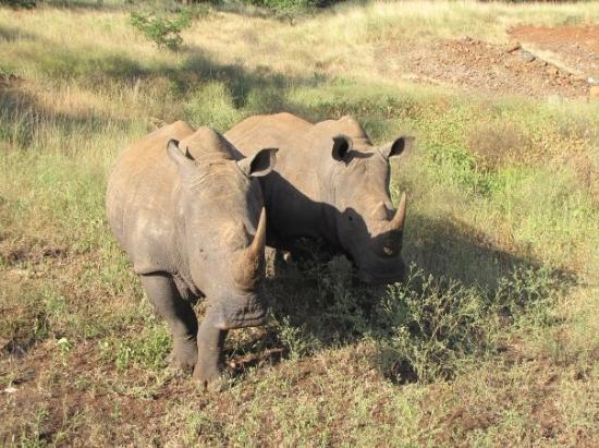 อุทยานแห่งชาติครูเกอร์, แอฟริกาใต้: Trop chou
