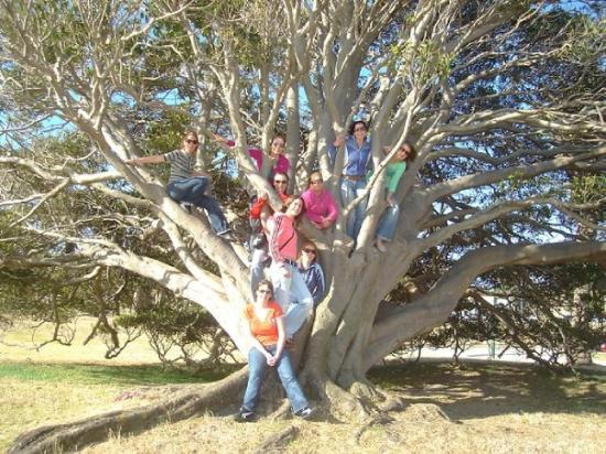 เซนต์กิลดา, ออสเตรเลีย: Climbing trees in Melbourne!