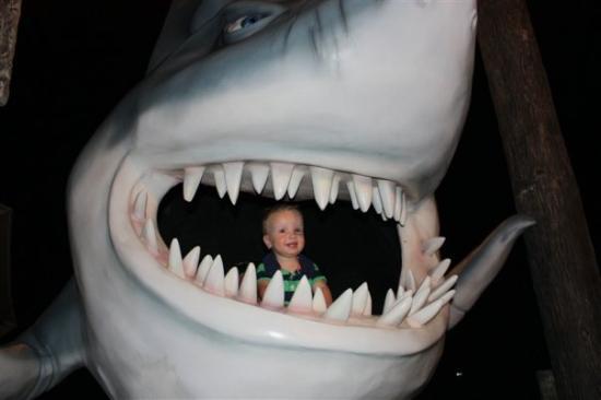 La Isla Shopping Village: Shark Boy