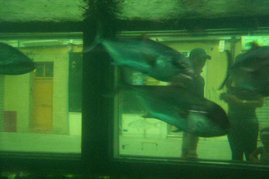Hotel Goya: L'acquario all'interno della città