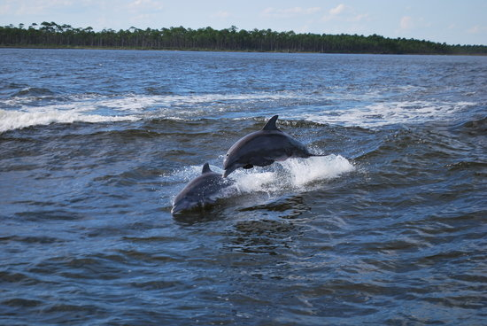 Orange Beach, Алабама: Dolphins 3