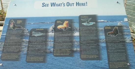 Cape Arago State Park : Wildlife that can be viewed from Simpson Reef
