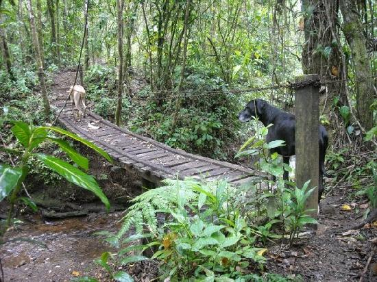 Chalet Nicholas: Hiking in the rainforest with John and the Great Danes