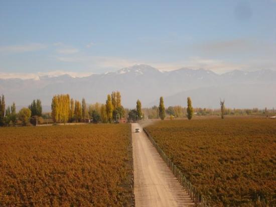 The Vines of Mendoza ภาพถ่าย