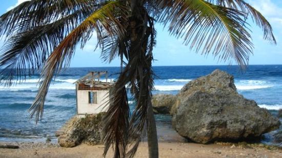 Bathsheba Beach: Bathsheba on the west coast