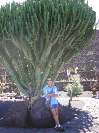 jardin de cactus photo