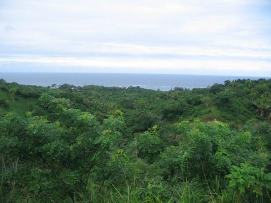 Roatan (เกาะโรอาทาน), ฮอนดูรัส: Luonto oli vehreää...