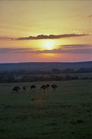 Nairóbi, Quênia: AVESTRUCES