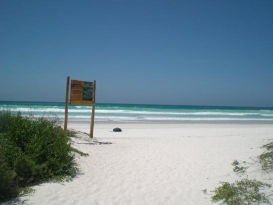 ซันตาครูซ, เอกวาดอร์: Tortuga Bay!!!