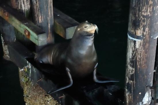 Santa Cruz Wharf: Oh yeah, look at me!
