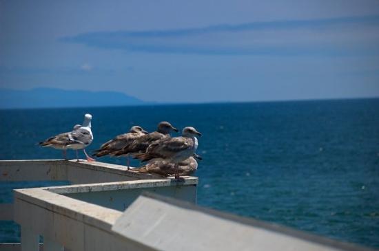 Santa Cruz Wharf: Enjoing the view.