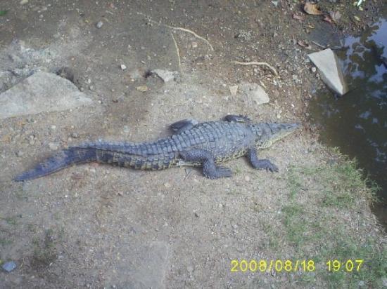 Ixtapa, เม็กซิโก: El cocodrilo!!!!!!!!!!!!!!
