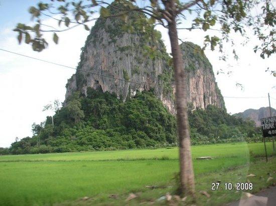 Sugar Cane Picture Of Padang Besar Perlis Tripadvisor