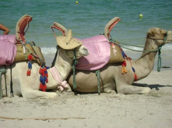 SunConnect Djerba Aqua Resort: Djerba, Tunisie   Photo délire