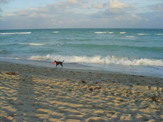Miami Beach Fl December 2006 South Ocean Drive