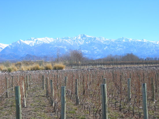 Ampora Wine Tours: Vineyards in the winter with snow-capped Andes