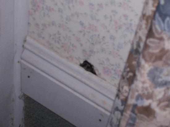 The Jenner Inn: mouse hole (Elijah Jenner Room, Aug. 2007)