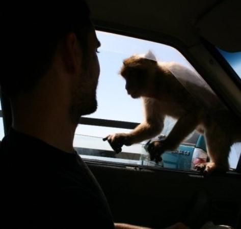 Apes Den ภาพถ่าย