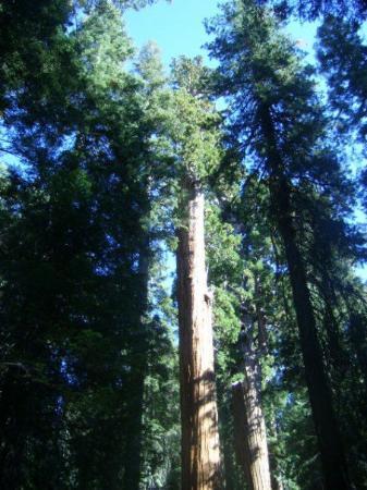 Sequoia and Kings Canyon National Park ภาพถ่าย