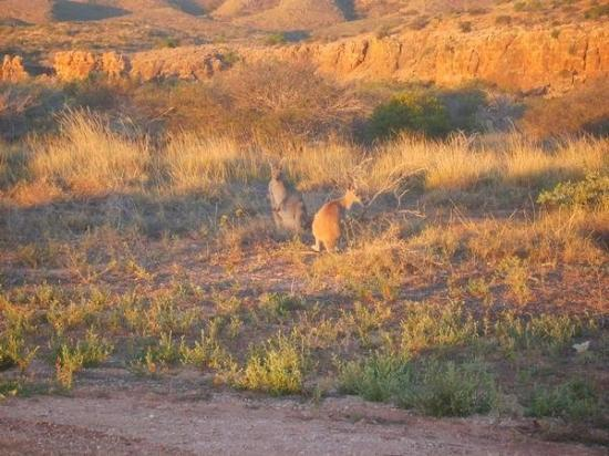 เอกซ์เมาท์, ออสเตรเลีย: Roos @ Turquoise Bay